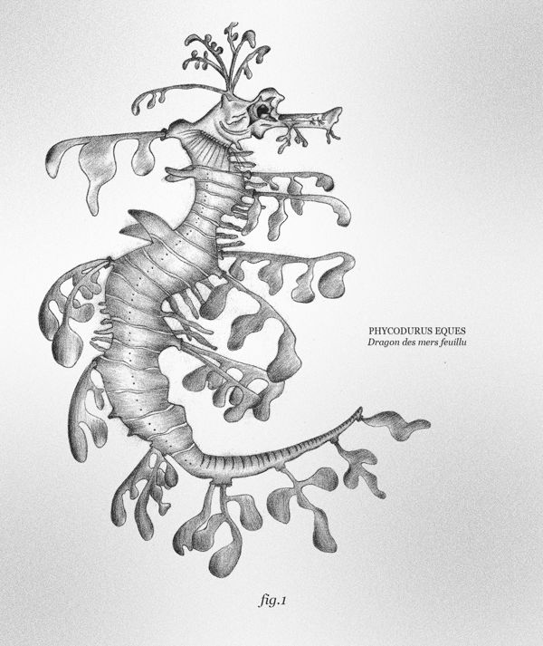 Leafy Sea Dragon By Jessica Perilhou Via Behance Linge