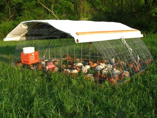 another great chicken tractor