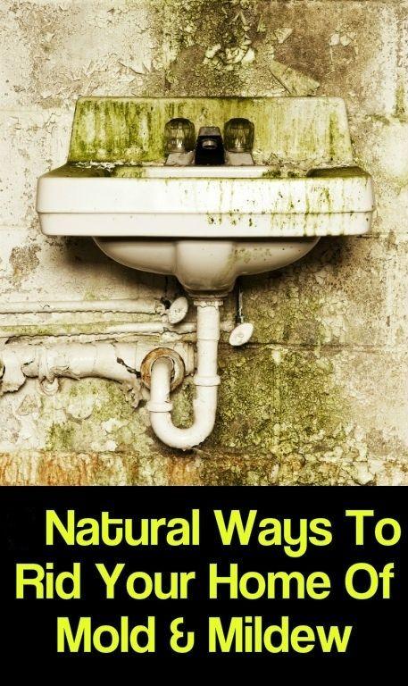 Herbsandoilsremedies Com Mold In Bathroom Mold And Mildew Mold Remover