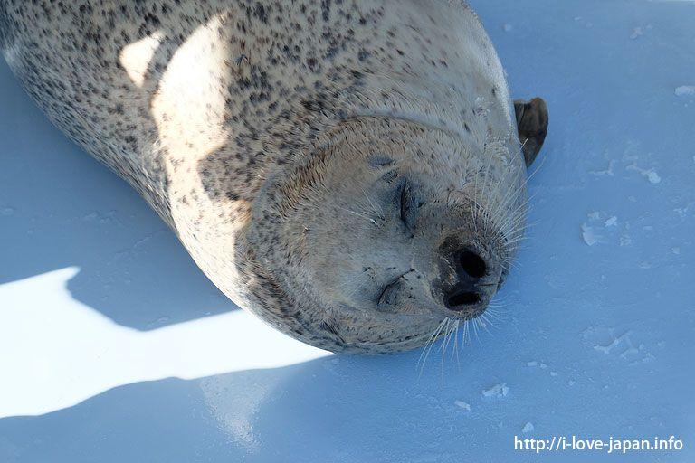Monbetsu in winter(Hokkaido) – I LOVE JAPAN