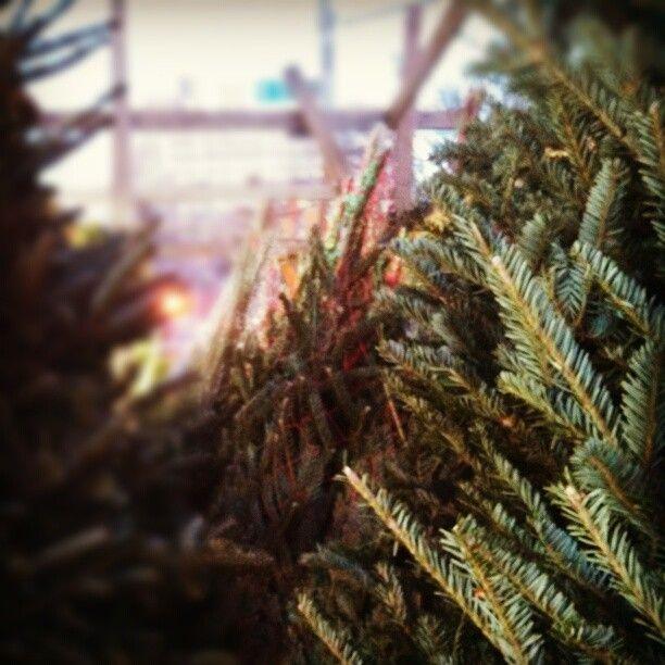 #Christmas #NYC # street # trees - @sir_13- #webstagram