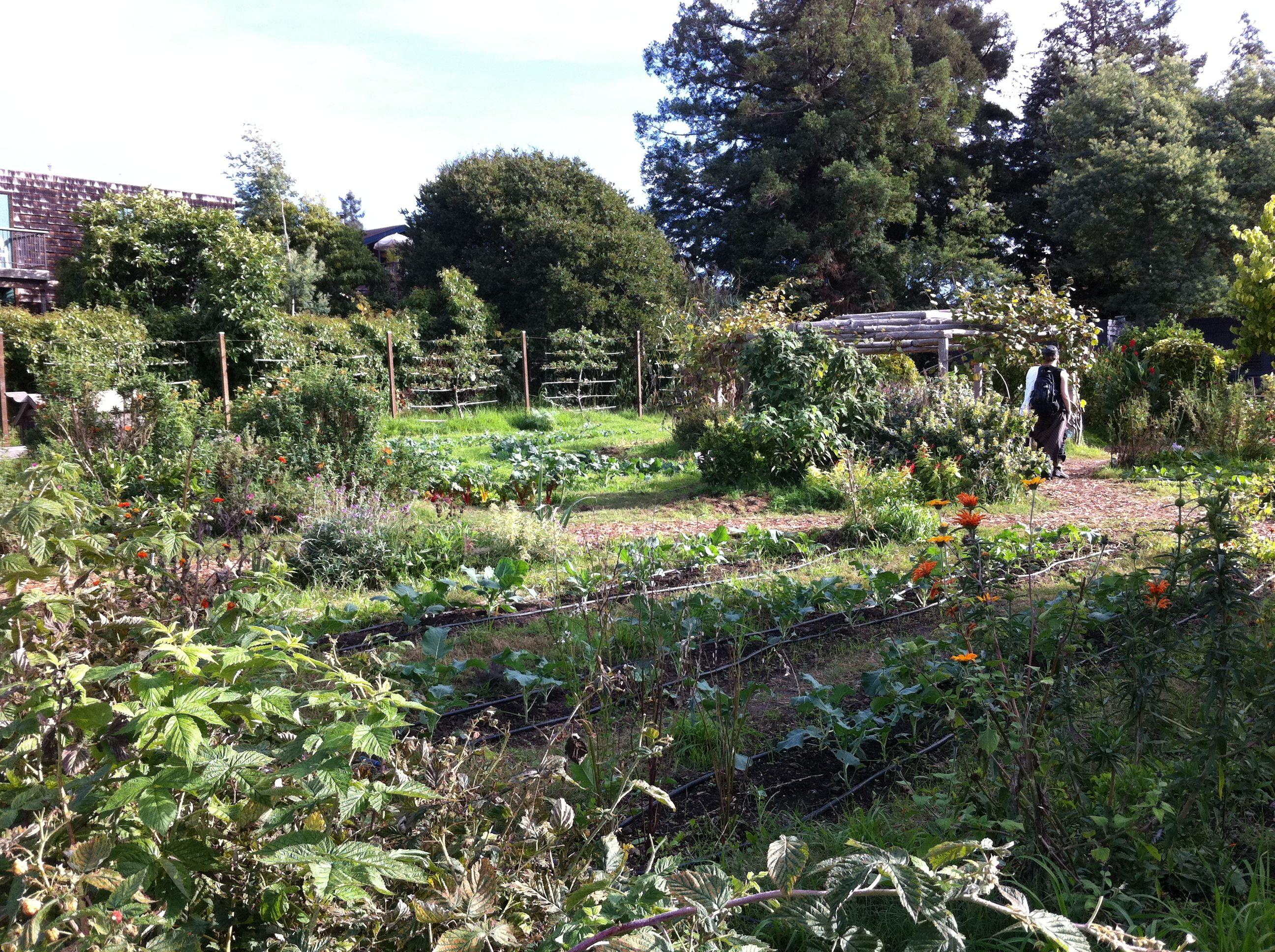 Edible Schoolyard Berkeley Ca School Yard Garden Plants