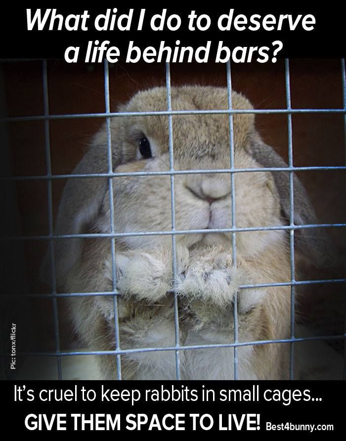 No bunny deserves to be kept in a small cage! See how their homes should be here... http://best4bunny.com/ideal-rabbit-homes-fantastic-creative-ideas/