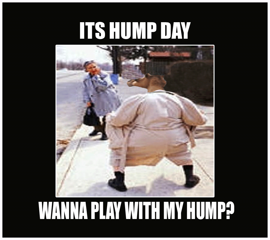 Wanna Play With My Hump Funny Hump Day Meme Funny Hump Day Memes Happy Hump Day Meme Hump Day Meme
