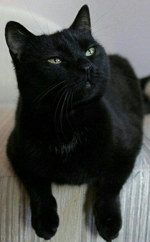 Black cat cross stitch pattern, cross stitch pattern, black cat, counted cross stitch pattern, felin