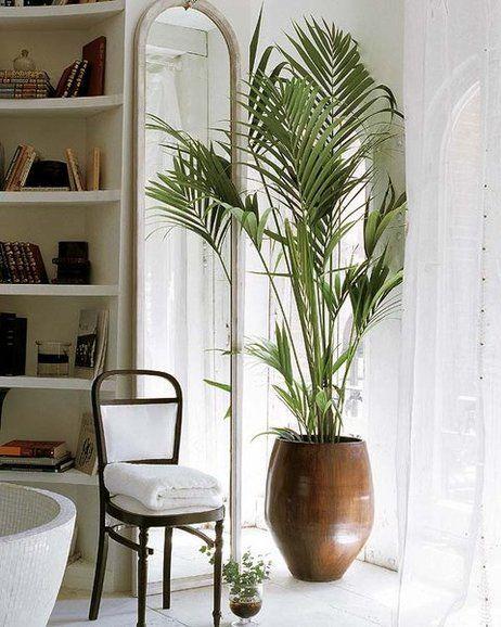 Ideas para decorar con plantas de interior plantas for Soportes para macetas de interior