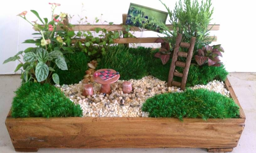 Luxury Idea Dish Garden Manificent Decoration Search Creations Of ...