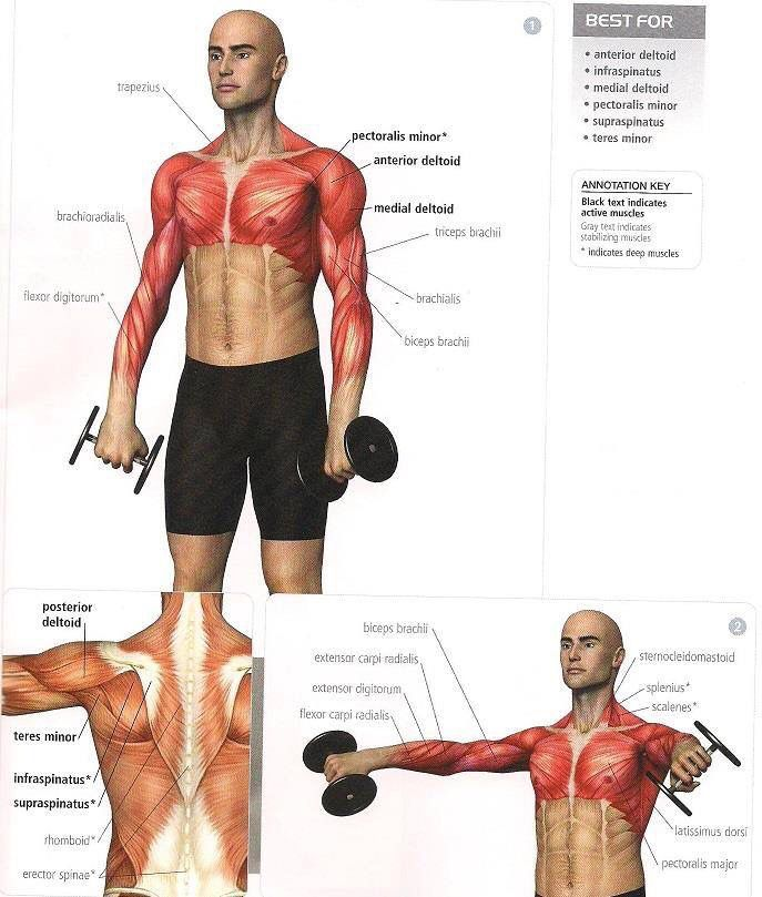 Pin by Omar Neyaz on Guy thing | Pinterest | Workout, Exercises and Gym