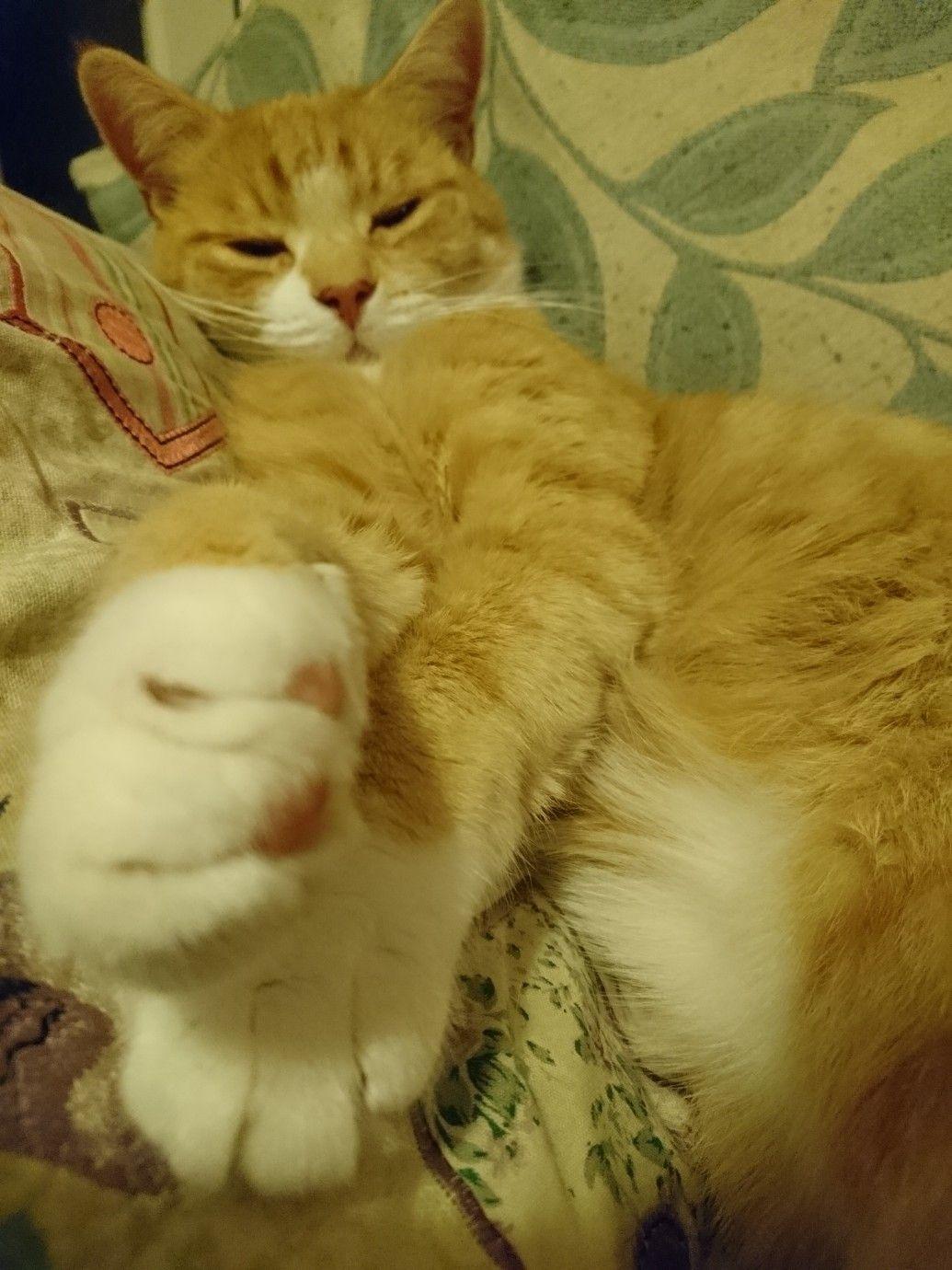 Max... The ginger kitten #gingerkitten Max... The ginger kitten #gingerkitten