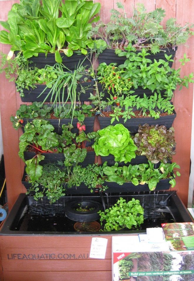 Based on the concept of aquaponics this hanging garden for Garden pool aquaponics