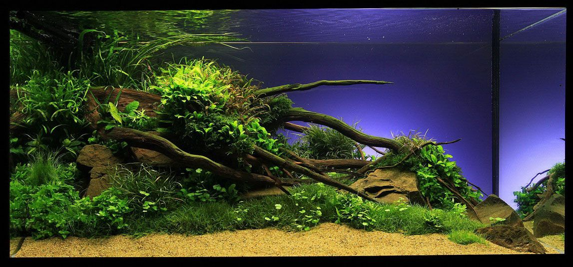 Freshwater Aquarium Design Ideas 5 gallon aquarium decorating ideas Find This Pin And More On Aquarium With Driftwood Photo Gallery Of The Aquarium Aquascape Design Idea
