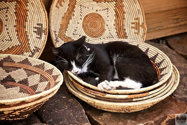 Kitty in a basket at the Jackalope Mercado in Santa Fe, New Mexico