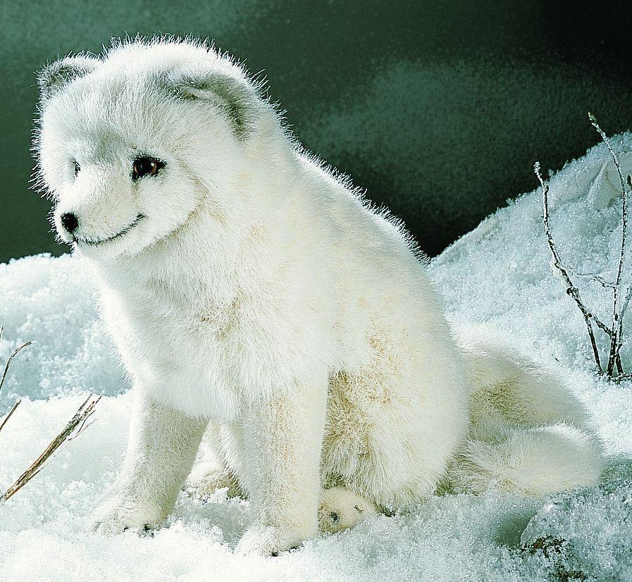 """""""Aurora"""" Arctic Fox Arctic fox, Pet fox, Plush animals"""