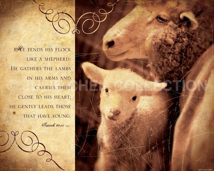 Image result for sheep and shepherding quotes | My Great Shepherd ...