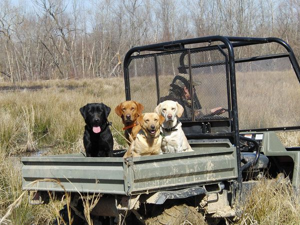 Gundogs - Duckhill | Duckhill | Dogs, Working dogs, Puppies