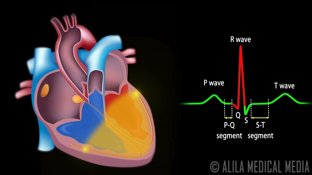 cardiac conduction system and understanding ECG, good animation to ...