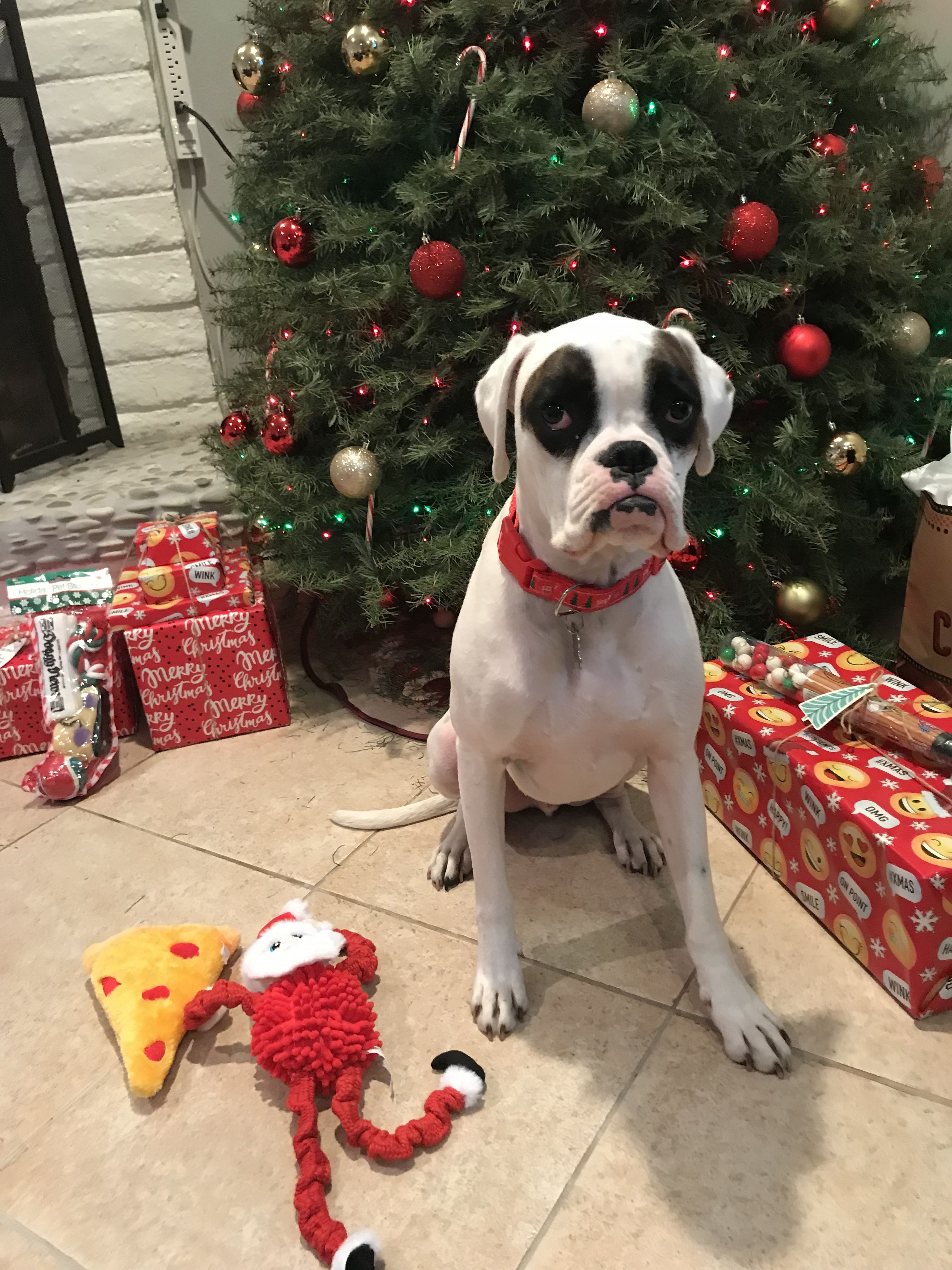 Ray S Christmas Boxer Puppy Christmas Boxer Dogs Boxer Puppy Puppies