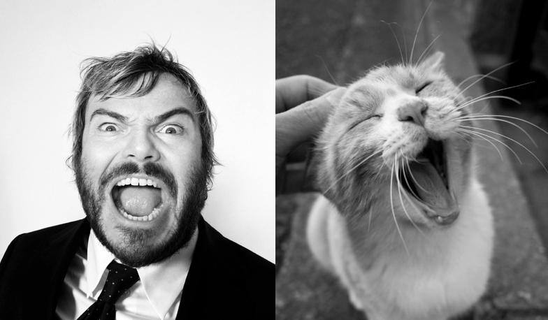 Des Hommes Et Chatons des hommes et des chatons - men and kitten | fun | gatos, animales