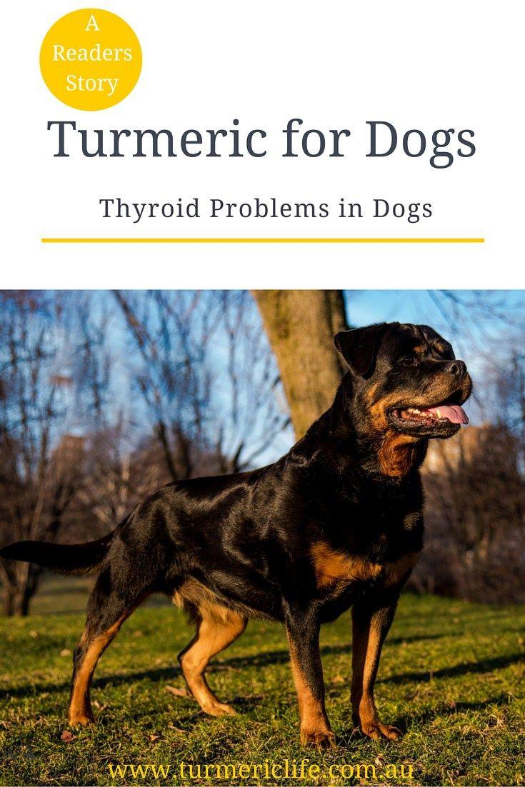 Park Art|My WordPress Blog_Best Dog Food For Thyroid Problems