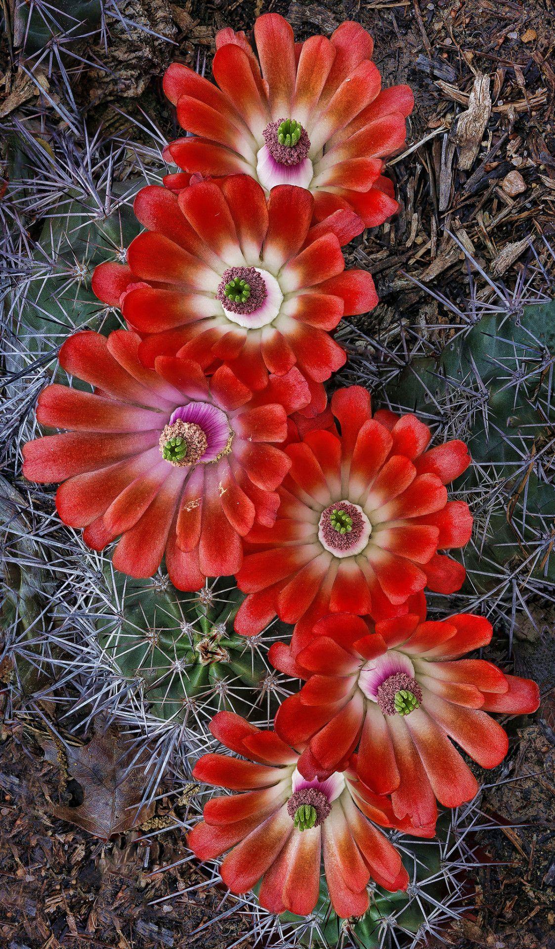Pin Di Andrea Parra Patino Su Cactus Nel 2020 Con Immagini