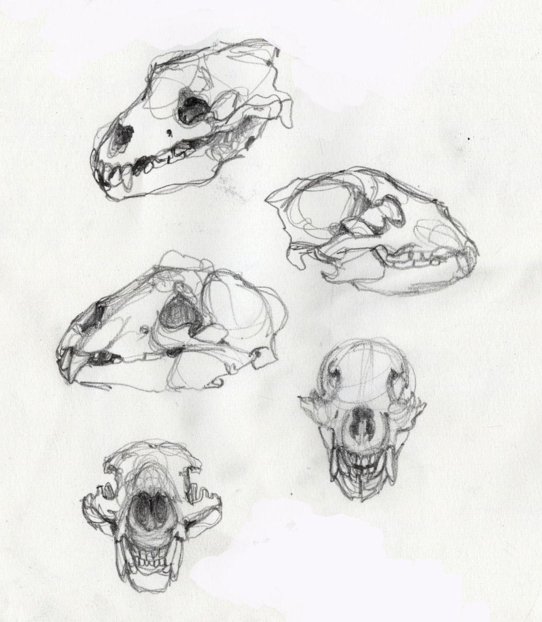 dog skull | References for Class | Pinterest | Dog skull