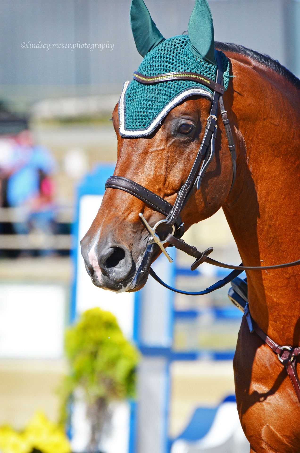 #Hunter #jumper #Salto #equine #grandprix #Orejeras #Adiestramiento #Dressage #bonnet #equestrian #ecuestre #black #blue #azul #negro #cavalo #caballo #horses #Kisakiclub
