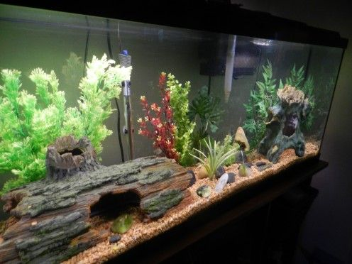 Freshwater Aquarium Design Ideas beautiful driftwood root for fish tank background purchase natural driftwood for your aquarium here Learn The Easy Way To Change The Water In Your Freshwater Aquarium To Avoid Spilling And
