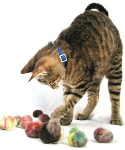 On The Ball Make Cat Toys From Your Extra Yarn Cat Toys Pet Toys Diy Cat Toys