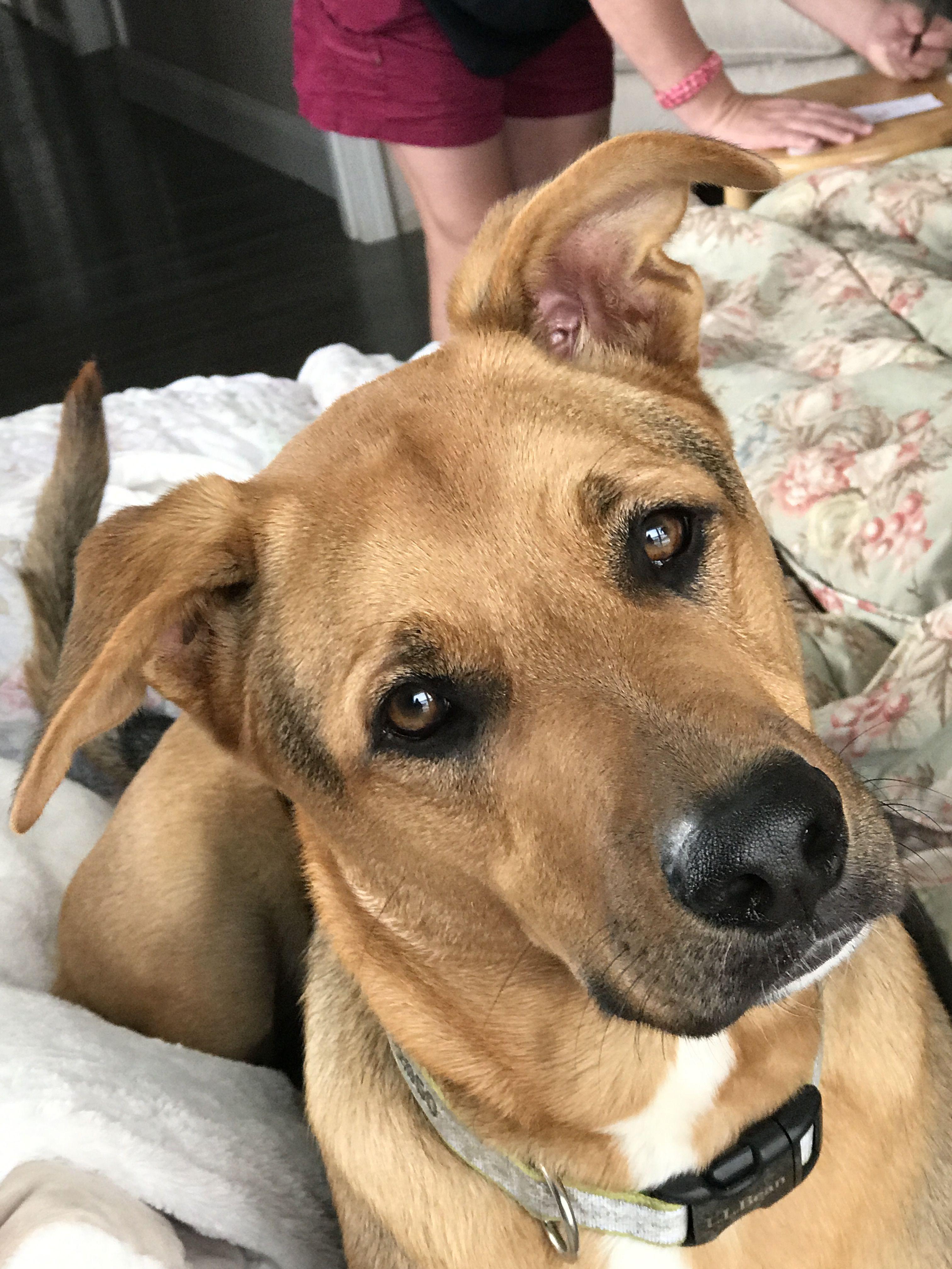 Cute Dog looking sideways!!!! | Labrador retriever, Cute