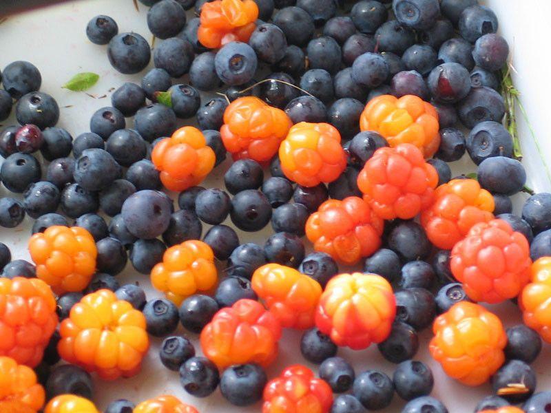 lakka + blueberries