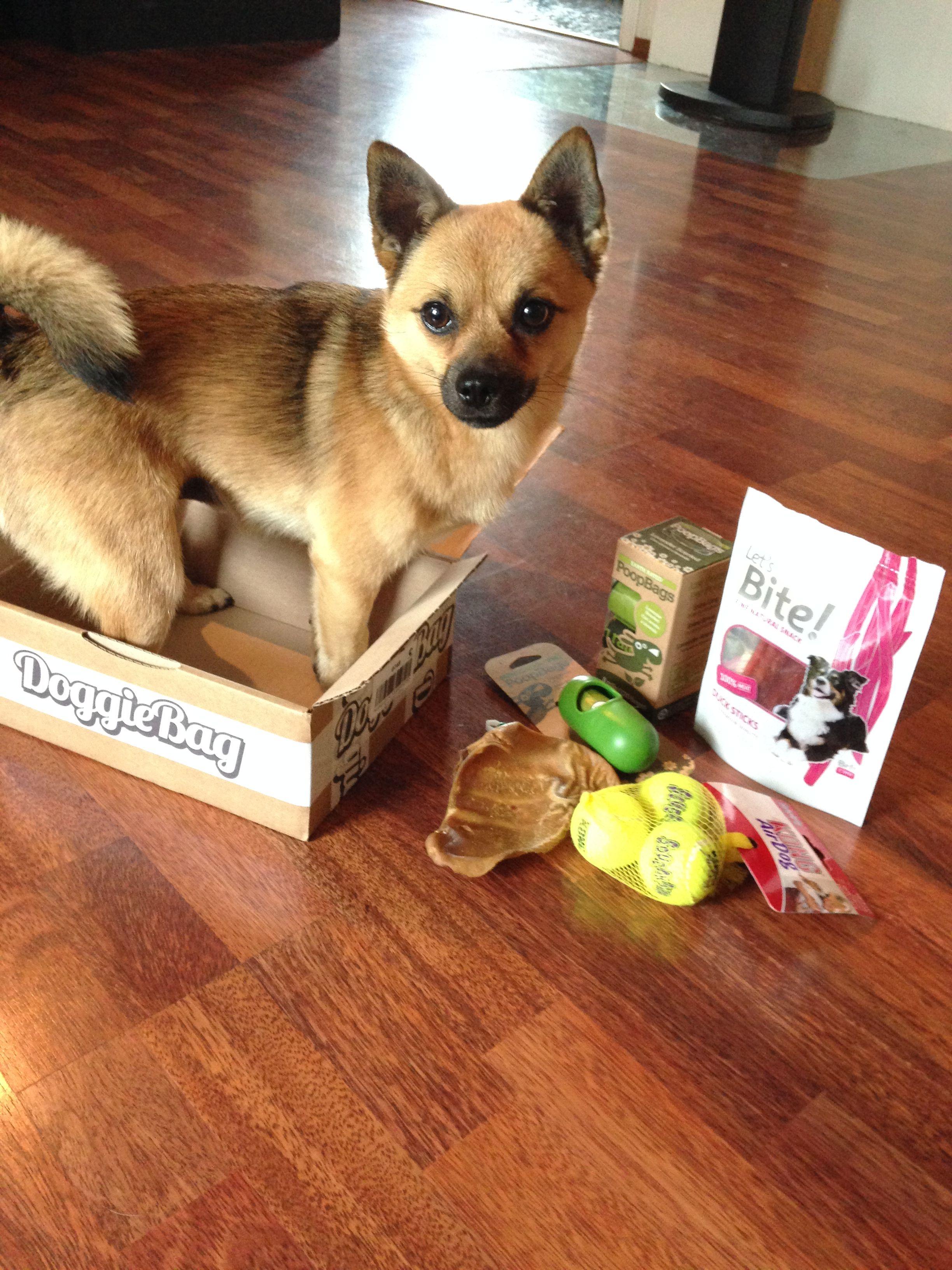 Rambo - DoggieBag.no #DoggieBag #Hund