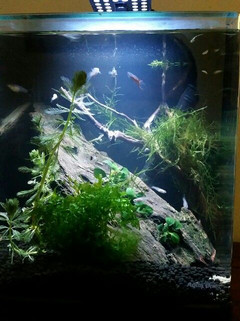 Shrimp aquascape | Aquascape, Aquarium