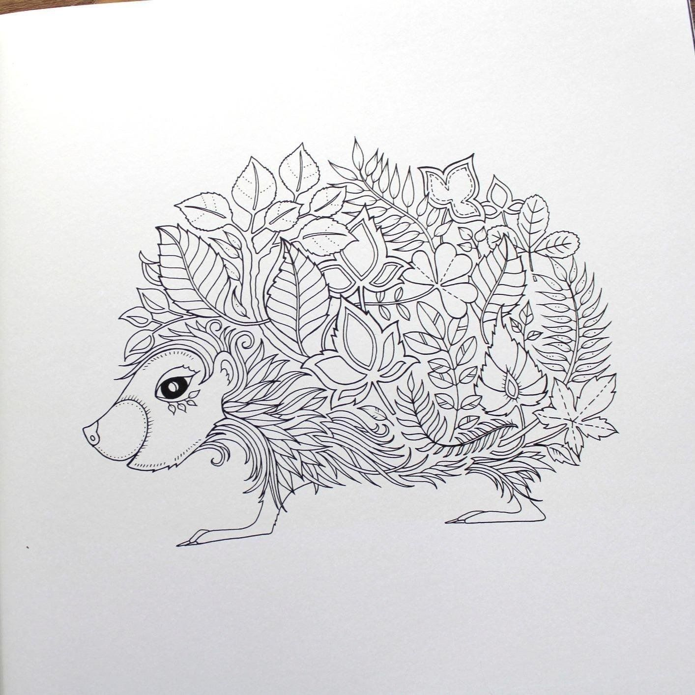 Enchanted Forest: An Inky Quest & Coloring Book: Johanna ...