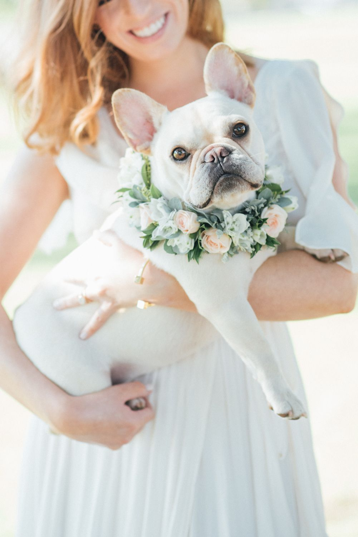 Puppy Love French Bulldog Wedding French Bulldog Puppies