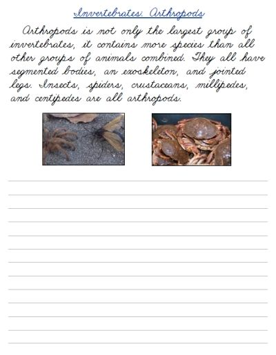 Free Printable Cursive Handwriting Worksheets On Invertebrate Life