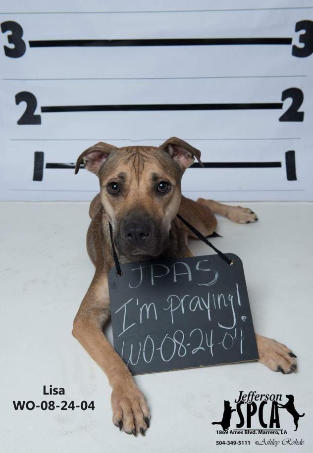 Adopt Lisa On Petfinder Adoption Dog Adoption Animals