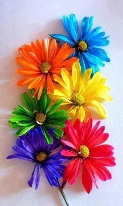 Beautiful Con Imagenes Colores Del Arco Iris Salpicadura