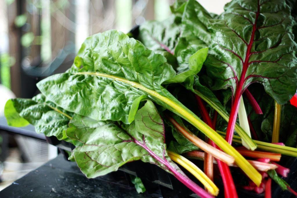 Freezing Greens Spinach, Collards, Kale, Mustard, Swiss