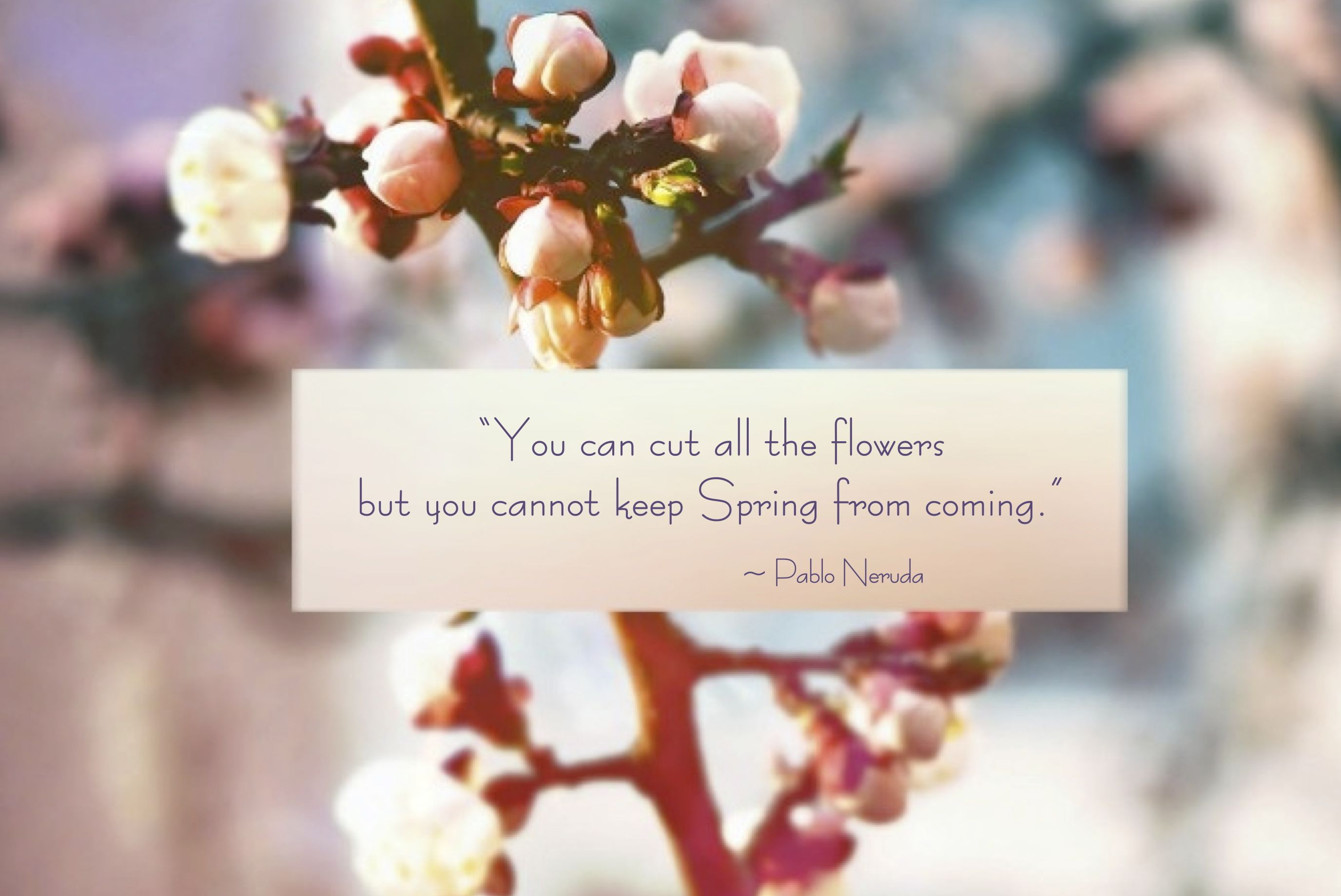 """You Can Cut All The Flowers But You Cannot Keep Spring"