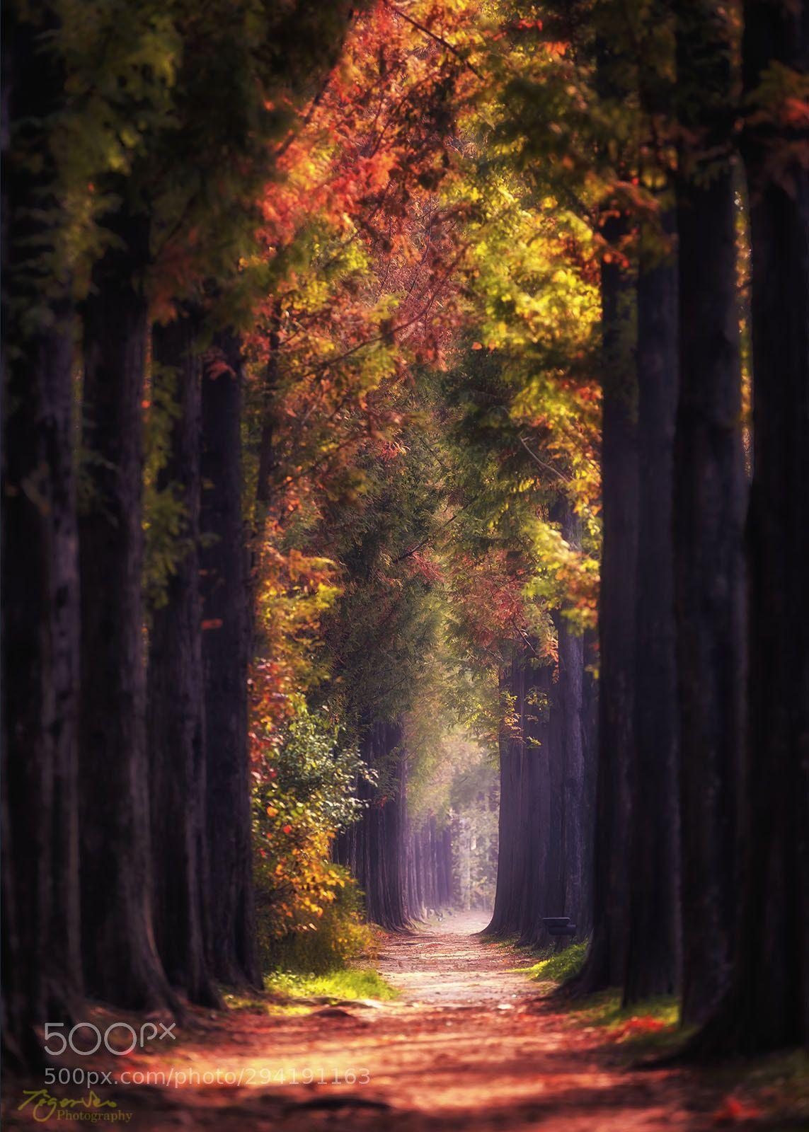 Sunny Day By Tigerseo Autumn Scenery Beautiful Nature Autumn Illustration