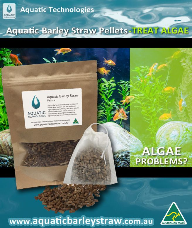 Aquatic Barley Straw Pellets Used To Combat Algae In Fish Tanks Aquariums No Scrub Just Pop The Sachet Into The Water An Fish Ponds Pond Filters Small Ponds