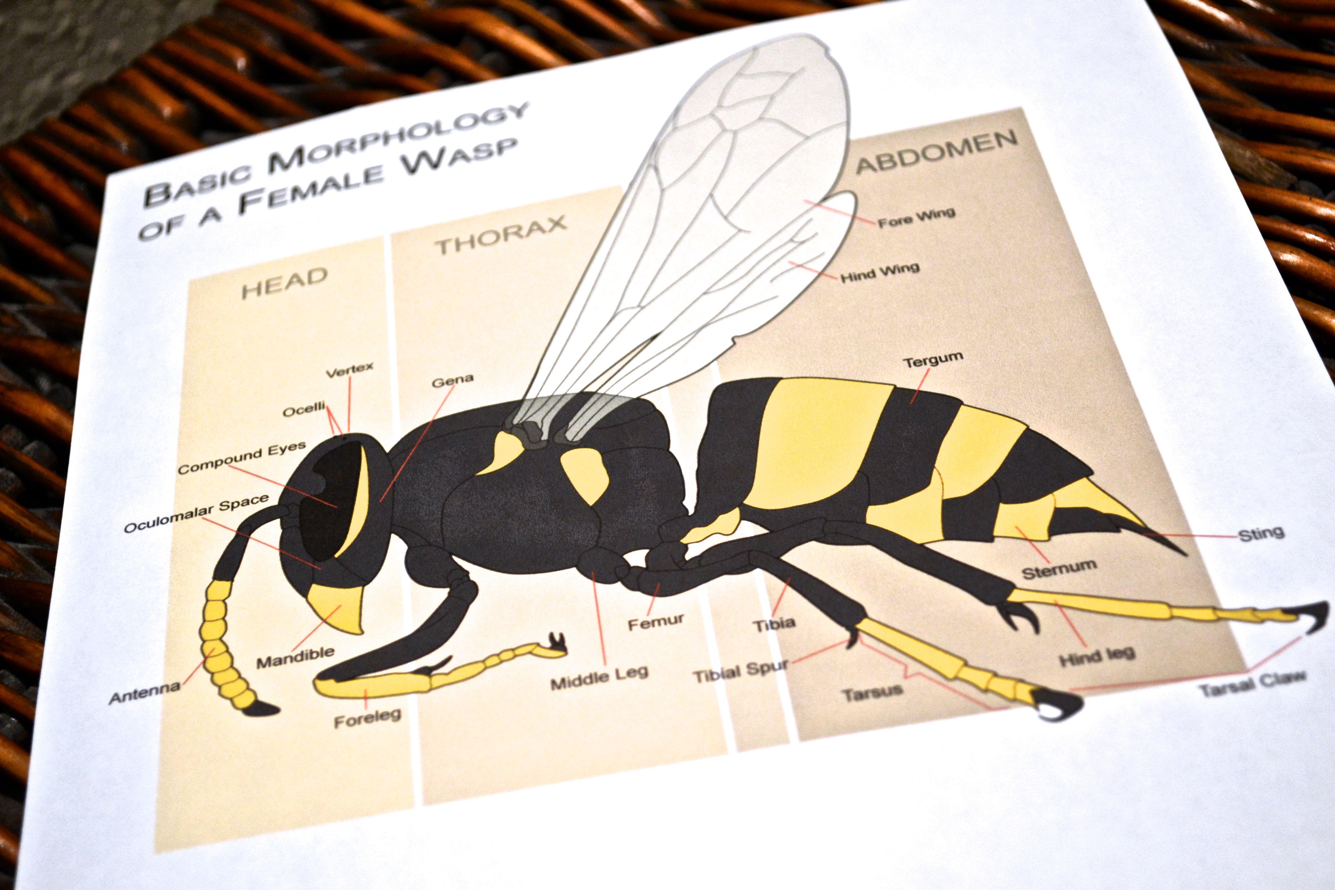 How to get rid of wasps wasp wood bees