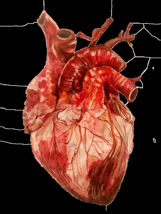 Anatomical Heart Study Adora Horton Human Human Heart Anatomical Heart Art Anatomical Heart Heart Artwork