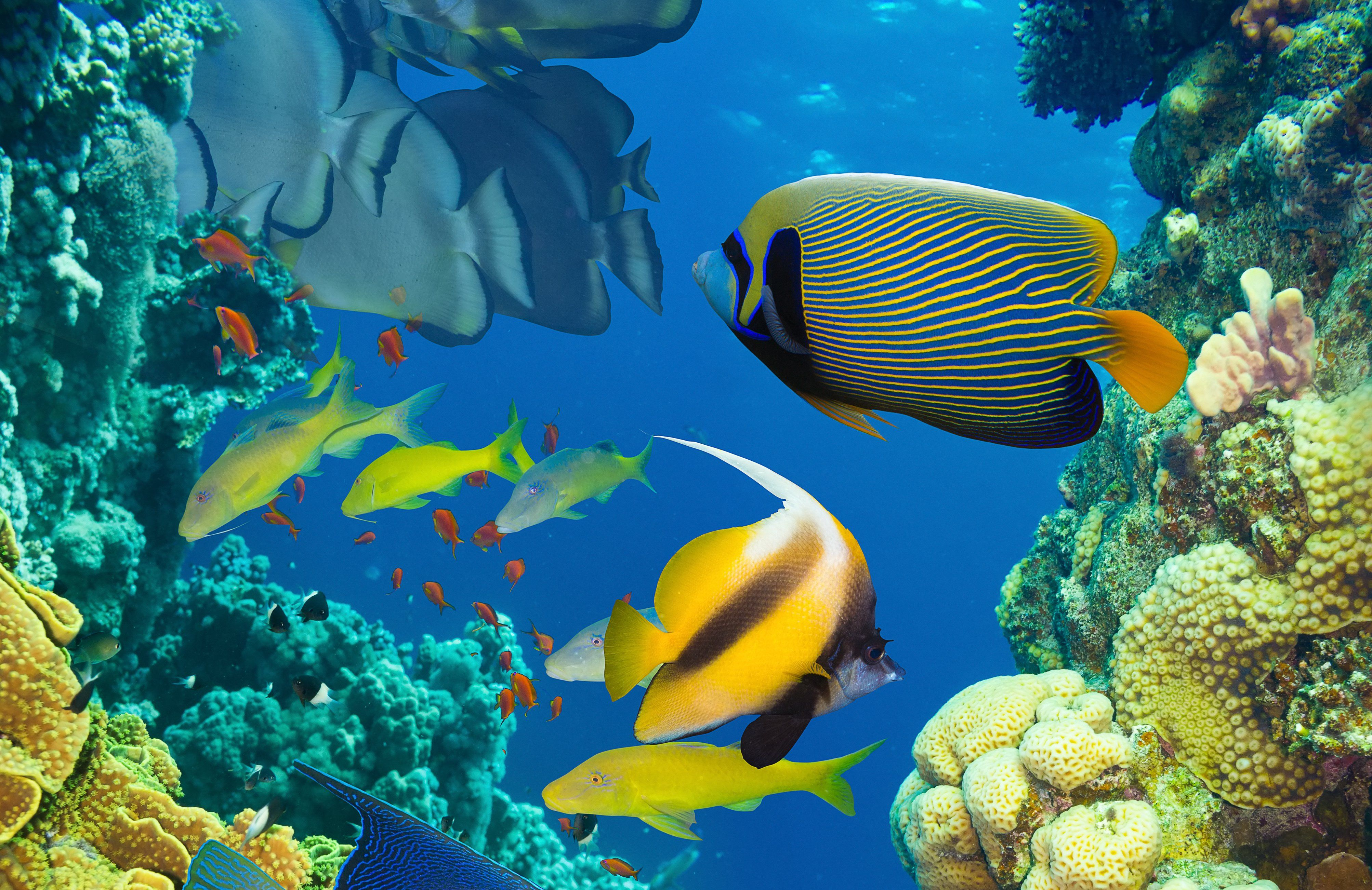Misc: Ocean Tropical Underwater Reef Fishes Coral Reefs Sunshine ...