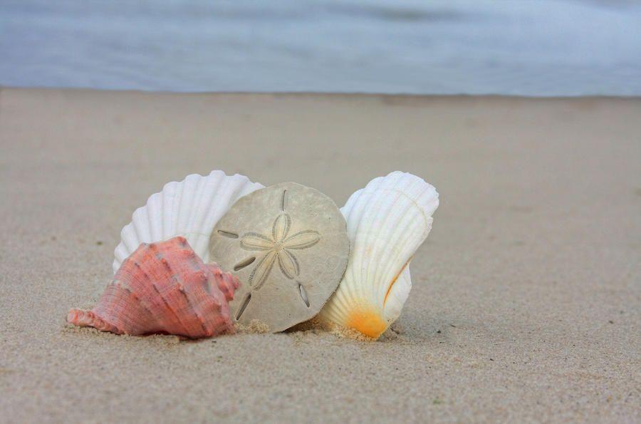 Google Image Result for http://images.fineartamerica.com/images-medium-large/seashells-on-the-beach-2-elizabeth-spencer.jpg