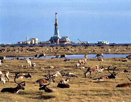The Oil Flows The Caribou Are Fine And Big Muddy Keeps Rising Alaska Wildlife Alaska The Last Frontier Prudhoe Bay
