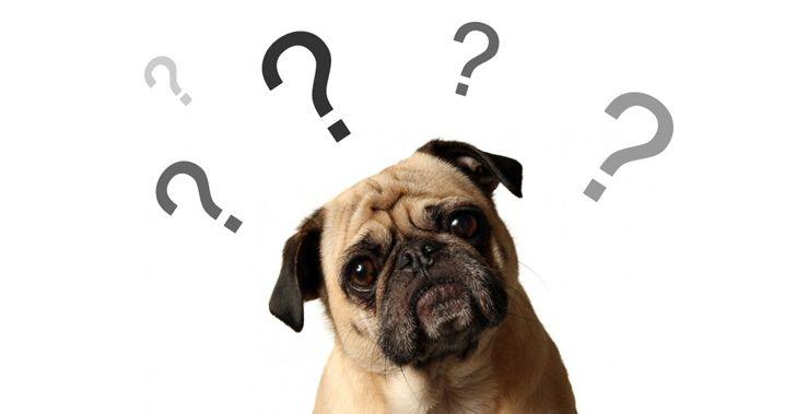 11 cosas que hacen los humanos y que los perros odian