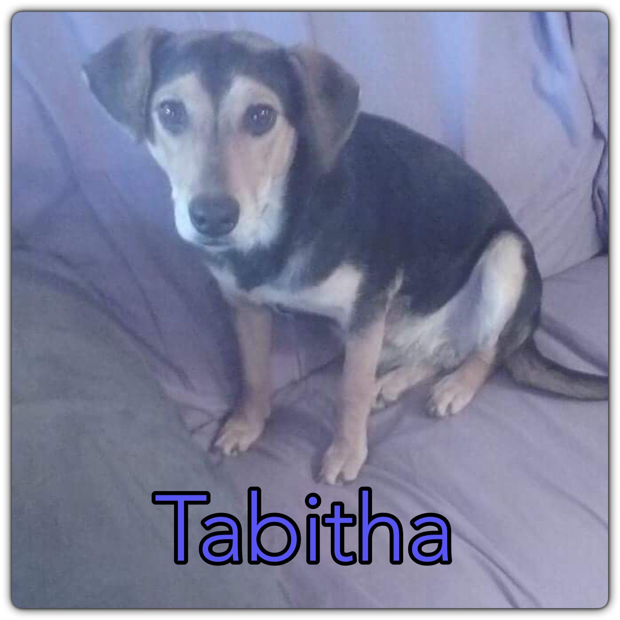 Adopt TabithaBorn to Stray Mama Dog on Dogs, Adoptable