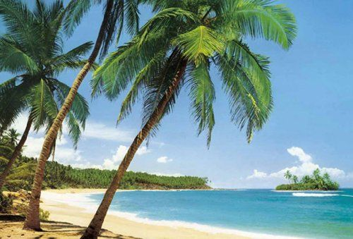Tropical Island Beach Photo Wallpaper Wall Mural Null Http Www