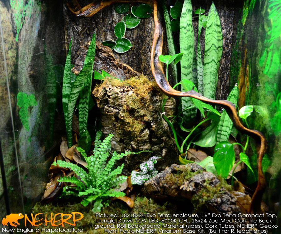 how to set up a gecko vivarium